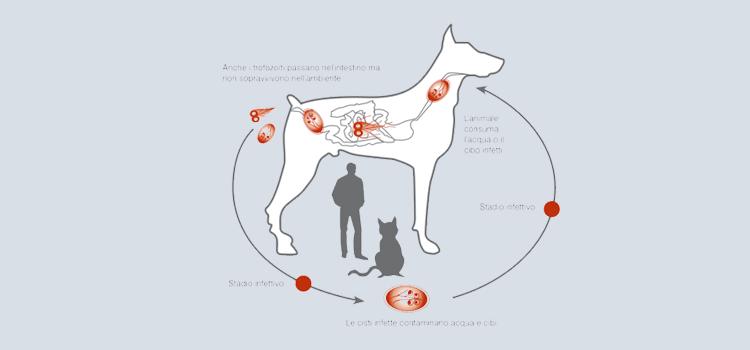 giardia cane sintomi